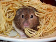 não posso come tudo se não vão me achar!