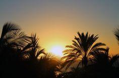 Sunset through palmtrees Gran Canaria [OC] [2074x1360]