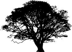 tree silhouette for invitations.good for a design I am working on! tree silhouette for invitation Oak Tree Silhouette, Tree Silhouette Tattoo, Silhouette Clip Art, Free Silhouette, White Oak Tree, Oak Tree Tattoo, Cool Silhouettes, Nature Vector, Tree Tattoo Designs