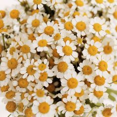 Flower Garden All Posts – Page 2 – A Beautiful Mess - Flower Power, My Flower, Wild Flowers, Beautiful Flowers, Wallpaper Harry Potter, Daisy, Flower Aesthetic, Jolie Photo, Beautiful Mess
