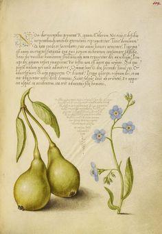 Письмо «Мы нашли новые Пины для вашей доски «цветы, ботаника».» — Pinterest —…