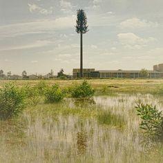 Dillon Marsh Photography - Invasive Species