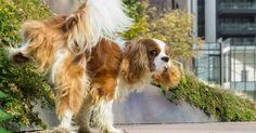 Les chiens ont souvent de curieuses manies. Le fait de gratter le sol après avoir fait leurs besoins, entre autres. Mais que veut dire cette étrange habitude?
