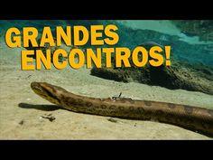 #8 EXPEDIÇÃO AVENTURA PANTANAL | ENCONTROS ESPECIAIS | RICHARD RASMUSSEN - YouTube