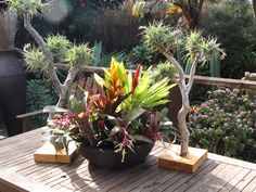 bromeliads and tillandsia trees