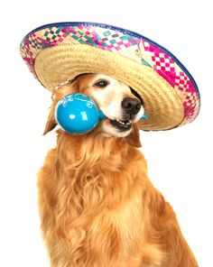 This dog is badass. Cinco de Mayo Freebies and Deals. Find savings the size of Mexico!