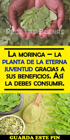 Keto Diet For Beginners, Beautiful Gardens, Organic Gardening, Food And Drink, Herbs, Vegetables, Healthy, Tips, Moringa Oleifera