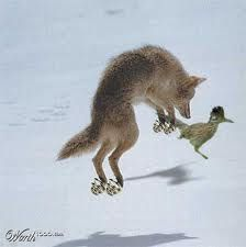 Roadrunner and the wolf. They're at it again! ;)