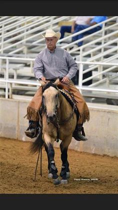 216 Best Cattle Horses for Sale on Equine com images in 2018
