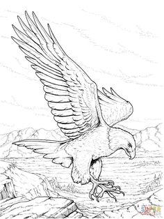 North American Bald Eagle | Super Coloring