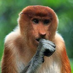 The Singing Monkey