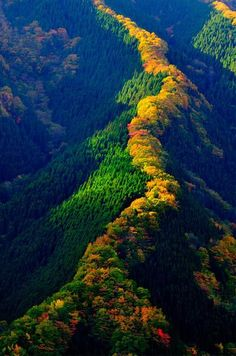 Line of maple trees along a ridge in Japan  source: http://travel.livedan330.com/listing/namego-valley-tenkawa-mountain-nara-japan/