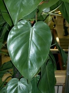 Houseplants that clean the air