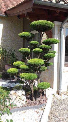 Beautiful form / repinned by Llewellyn Landscape & Garden Design | www.llgd.co.uk
