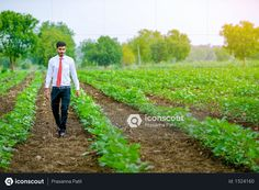 Indian agronomist at cotton field Photo Vector Icons, Vector Free, Agriculture Photos, Cotton Fields, 3d Assets, Photo Illustration, Free Design, Photoshop, Animation