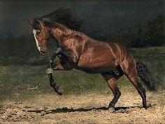 RABI MAC (Utrerano VII - Joya MAC) 04/02/2007 Breeder/Owner: YeguadaMiguel Ángel de Cárdenas, Spain ©Wojtek Kwiatkowski