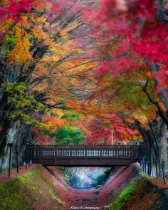 The World Photography Inspiration Fall Pictures, Pictures To Draw, Nature Pictures, Pretty Pictures, World Travel Tattoos, Beautiful Places In Japan, Autumn Scenes, Japanese Landscape, World Photography