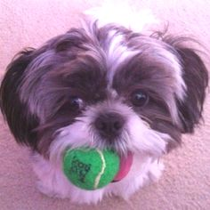 Play with me....please??
