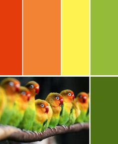 Birds of a feather flock together - Great color combo - Citrusy - Colors for Jaynie's Kitchen - light orange as main color