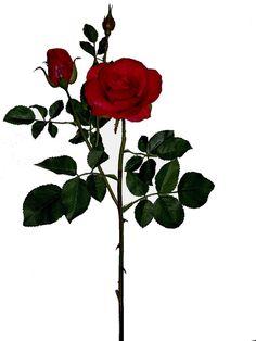 Linda rosa vermelha, com 1 botão aberto pequeno, 1 botão semi-fechado pequeno e outro botão fechado pequeno, qualidade extra | Referência: 1356800000603 | Altura: 58 cm | Composição: Tecido, Plástico e Arame