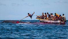 Melihat Tradisi Berburu Paus di Lamalera