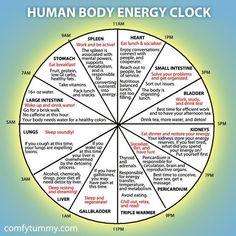 Infographic: Explore Your Human Body Energy Clock It's more of a Chinese medicine than Ayurveda. Reiki, Chinese Body Clock, Ayurveda, Alternative Heilmethoden, Alternative Health Care, Health And Wellness, Health Fitness, Wellness Tips, Fitness Gear