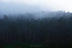 El bosque perdido. #pontevedra #coruña #ourense #lugo #vigo #ferrol #paisaje #galicia #naturaleza