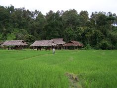 Country side - Chiang Mai
