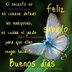 Cuida tu jardin y las mariposas volaran hacia ti