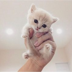 Cute Cat #cutie #kitten
