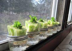 Låt soporna växa och bli ny mat. Här är tio rester från köket som kan få en andra chans.