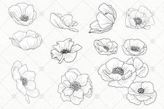 VECTOR Poppy Blossoms Illustrations - Illustrations