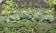 Rotation des cultures et engrais verts