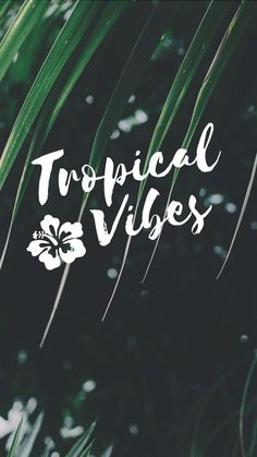 Tropical Vibes Quote iPhone 7 Plus Wallpaper / Tap to downlo Iphone Wallpaper Tropical, Iphone 7 Plus Wallpaper, Iphone 7 Wallpapers, K Wallpaper, Wallpaper Quotes, Cute Wallpapers, Summer Wallpapers For Iphone, Cellphone Wallpaper, Summer Backgrounds