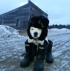 The 49 Most Canadian Dogs On The Internet