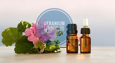 Geranium Essential Oil has a lot of benefits. It is often used to improve the mental, physical, and the emotional health. Geranium Essential Oil is native to South Africa, but Russia and Egypt are the largest producing countries today. Extracted from the leaves and stems of the Geranium plant by