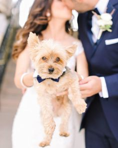 We absolutely love it when couples include their #pets in their #bigday! How cute is this #ringbearer pup the #bride's stunning #bouquet and a surprise guest all on the blog now! | Photography: @kayenglishphotography | Cinematography: @willowtreefilms | Invitations: @apdesignco | Hair: @lasorellabridal by smpweddings