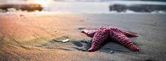 Stelle marine sulla sabbia del mare
