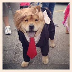 Pin for Later: 15 of the Best DIY Halloween Dog Costumes Out There Dognald Trump