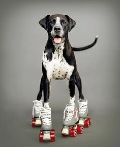 On a roll! This photo of Kizzie, a 6-year-old boxer-Dalmatian mix, was taken in New Zealand.