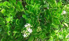 Descubre algunos detalles importantes sobre el jade que siempre hemos querido.