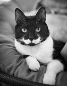 5 Pets wit strange and amazing markings, love those moustaches :)