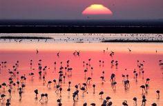 Espacio Natural Doñana. Parte del Parque Natural se integra en el Aljarafe Sevillano
