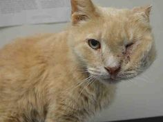 SU ORANGE URGENT CAT ON DEATH ROW,Please pledge even $5 to Rescue