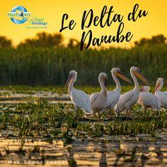 Découvrez le Delta du Danube en Roumanie ! Danube Delta, Spa, The Cure, Father, Green, Animals, Us National Parks, Tourism, Pai