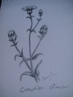 Carnation Flower :See here how to make it http://www.easy-drawings-and-sketches.com/draw-carnation.html