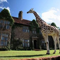I've always wanted to visit Kenya, but now I have a place to stay :) This resort is home to a herd of giraffes! Giraffe manor.