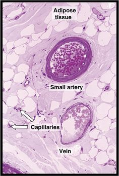 Histology Block 2 at University of South Florida - StudyBlue