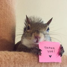 Baby Squirrel Orphaned In Hurricane Is Now Someone's Beloved Pet Squirrel Girl, Cute Squirrel, Squirrels, Cute Baby Animals, Animals And Pets, Funny Animals, Wild Animals, Beautiful Creatures, Animals Beautiful