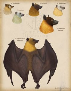 Flying Foxes Chiroptera: Pteropodidae: Pteropus Genus Pteropus Illustration by *JennyParks Done as part of a larger commission for a research project by Susan M. Tsang [a CCNY grad student] who studies the phylogeography of Southeast Asian animals, particularly that of flying foxes  Pteropus, she says, is an ideal focal taxon for Southeast Asian biogeographic studies. Flying foxes are Old World fruit bats that play an  important role in seed dispersal in island ecosystems.